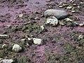 Insel Vilsandi 1.jpg