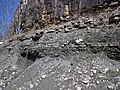 Interbedded shale and limestone (upper Cave Branch Member, Slade Formation, Upper Mississippian; Clack Mountain Road Outcrop, south of Morehead, Kentucky, USA) 4 (45464170185).jpg