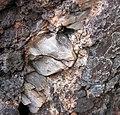 Intergranular calcite in autobrecciated amygdaloidal tholeiite basalt aa lava flow top (flow B, Two Harbors Basalts, North Shore Volcanic Series, Mesoproterozoic, 1097-1098 Ma; Burlington Bay, Two Harbors, Minnesota, USA) 4.jpg