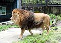 Ishikawa Zoo - Animals - 03 - 2016-04-22.jpg