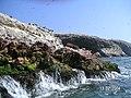 Islas Ballestas - panoramio (25).jpg