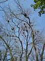 Izbište-Crow's nests.jpg