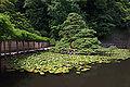 Izumo-taisha03bs4592.jpg