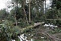 Jägerpfad Freudenstadt 2020-03-12 05.jpg