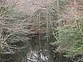 James Branch looking downstream from DE 24.jpg