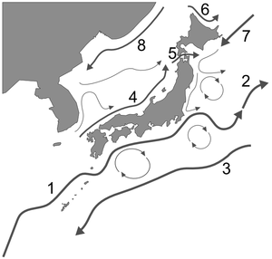 Kuroshio Current - The ocean currents surrounding the Japanese archipelago: 1. Kuroshio 2. Kuroshio extension 3. Kuroshio countercurrent 4. Tsushima Current 5. Tsugaru Current 6. Sōya Current 7. Oyashio 8. Liman Current