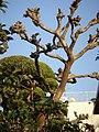 Japanese garden trees.jpg
