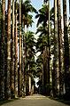 Jardim Botânico, Rio de Janeiro - State of Rio de Janeiro, Brazil - panoramio (7).jpg