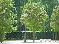 Jardin palais ducal parme 1.JPG