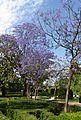 Jardins del Real de València, xicrandes.JPG