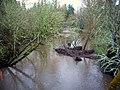 Johnson creek SE 41st P2145.jpeg