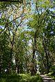 Kahovka Arboretum 08 (YDS 1304).jpg