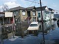 Katrina rue.jpg