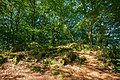 Katzenbuckel - Felsformation westlich des Aussichtsturms.jpg