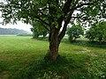 Kevelaer-Winnekendonk NSG Fleuthbenden PM18-10.jpg