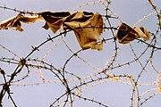 Khiam detention camp stripped cloth