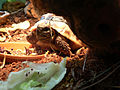 KleineSchildkröte.JPG