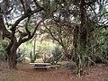 Koko Crater Botanical Garden - IMG 2214.JPG