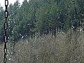 Koniec zimy 02 - panoramio.jpg