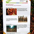 Kottenforst – Waldschäden 2019, Info Regionalforstamt.jpg