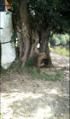 Krishnarampur sosthi tala .png