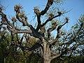 Kromeriz - Kvetna zahrada, strom.JPG