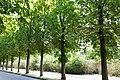 KulTour Parkanlage Sanssouci Am Grünen Gitter-3177.jpg