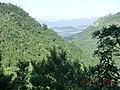 Kuranda QLD 4881, Australia - panoramio (28).jpg