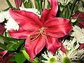 Květiny 6914.jpg