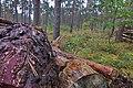 LSG Forst Rundshorn IMG 3072.jpg
