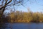 LSG H 00070 Calenberger Leinetal - Teich an der Calenburg (11).jpg
