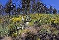 La Palma Hillside 1 (5489385520).jpg