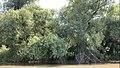 Lacul Beleu priveliște 20.jpg