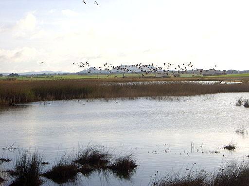Laguna de Petrola