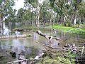 Lake Broadwater after rain.jpg