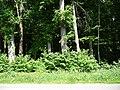 Landschaftsschutzgebiet Waldgebiet bei Neuenkirchen Melle, von der Straße aus - Datei 2.jpg