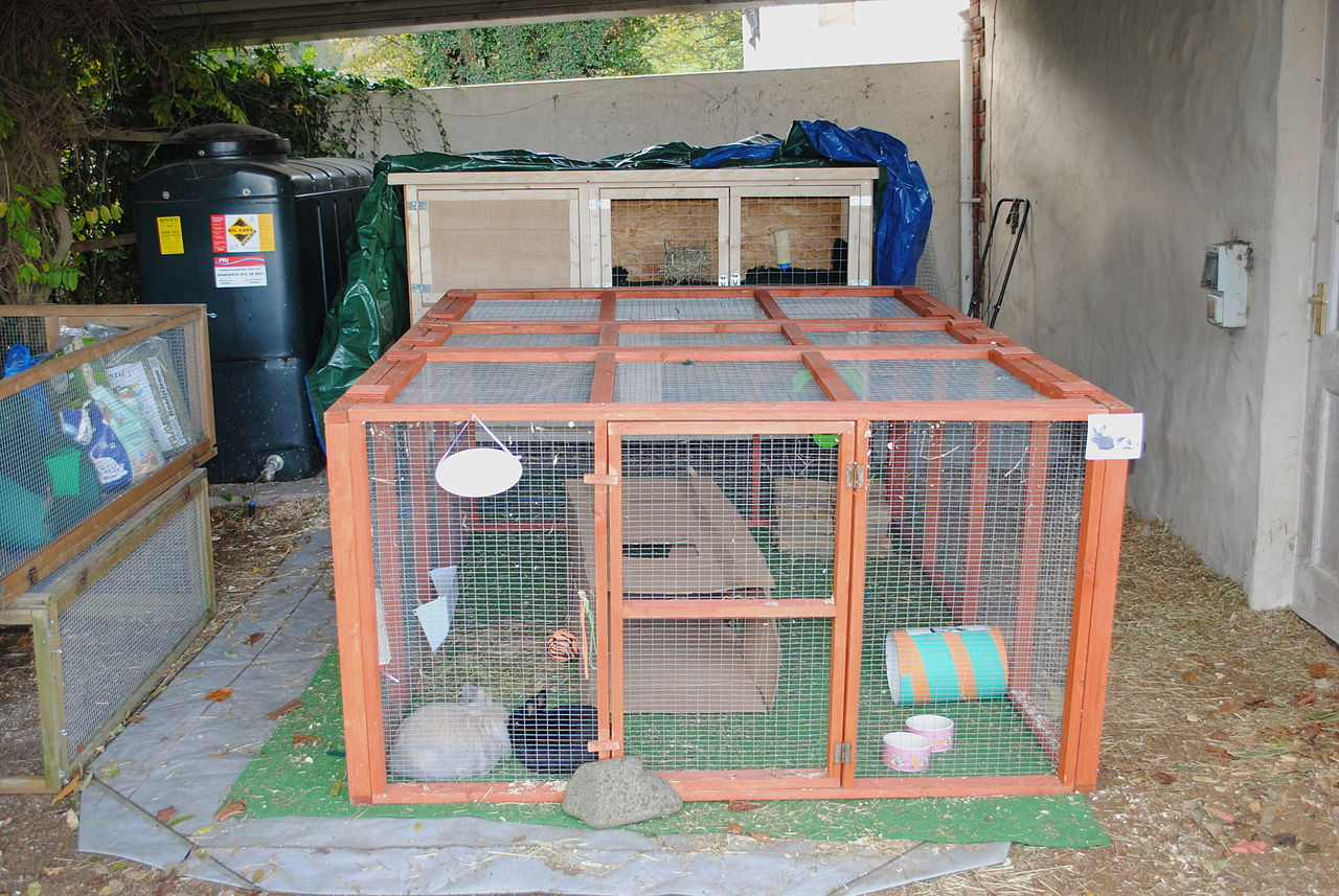 Enclosure For Keeping Animals Or Reptiles Usually Glass