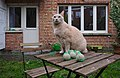 Larry the cat sitting on a table next to bird food balls in a backyard in Auderghem, Belgium (DSCF2310).jpg