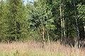 Lasy Łączańskie - panoramio (27).jpg
