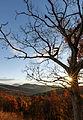 Late Fall Sunstar (22436537419).jpg