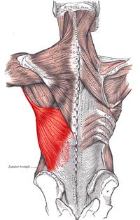 Musculos del torax yahoo dating