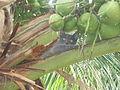 Law o gato macaco 02.JPG