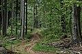 Leśny slalom -) - panoramio.jpg