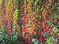 Leaves of autumn.jpg