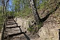 Leitenwälder der Isar 0667.jpg