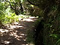 Levada do Risco, Madeira, Portugal, June-July 2011 - panoramio (5).jpg