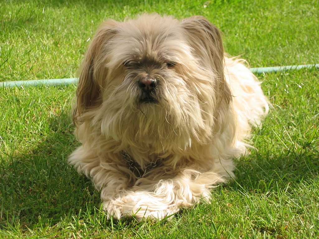 Rolly Dog Breed