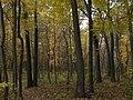 Li-co-ky-we Trail - panoramio (1).jpg
