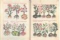 Libellus de medicinalibus Indorum herbis ff. 38v-39r.jpg