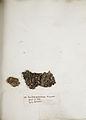 Lichenes Helvetici IX X 1833 004.jpg